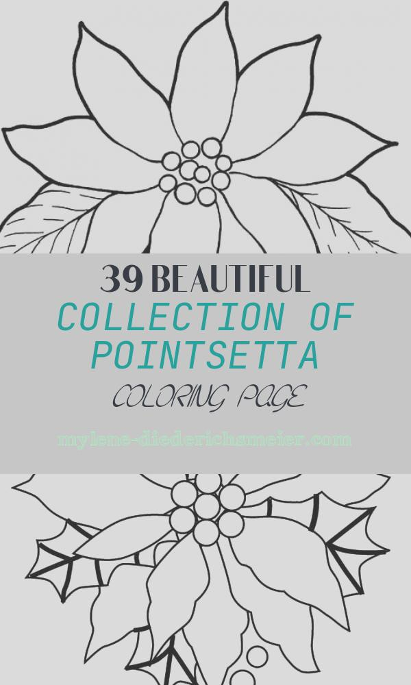 Pointsetta Coloring Page New Gorgeous Poinsettia Flower Coloring Page Download
