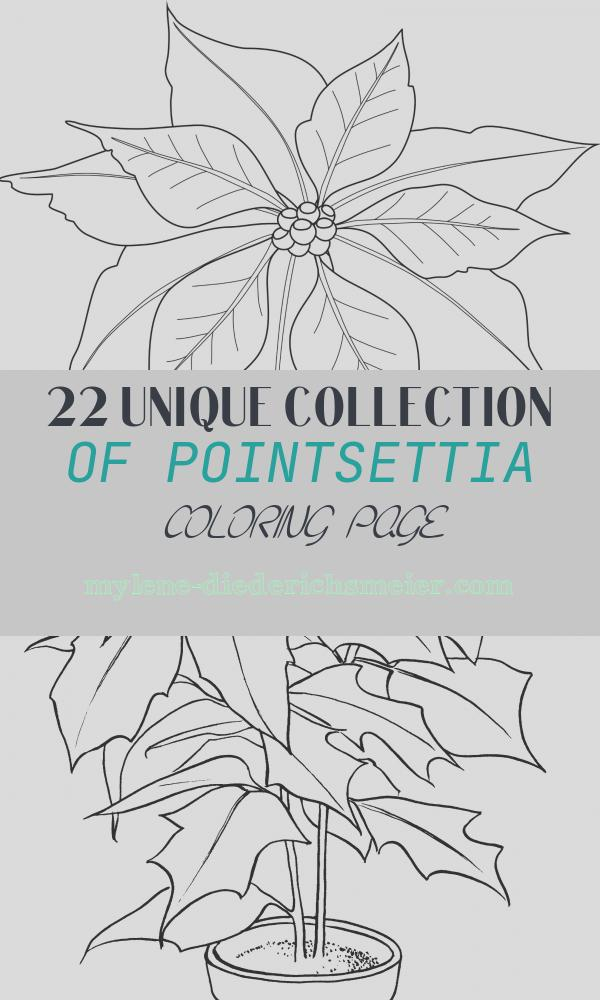 Pointsettia Coloring Page Awesome Free Printable Poinsettia Coloring Pages for Kids