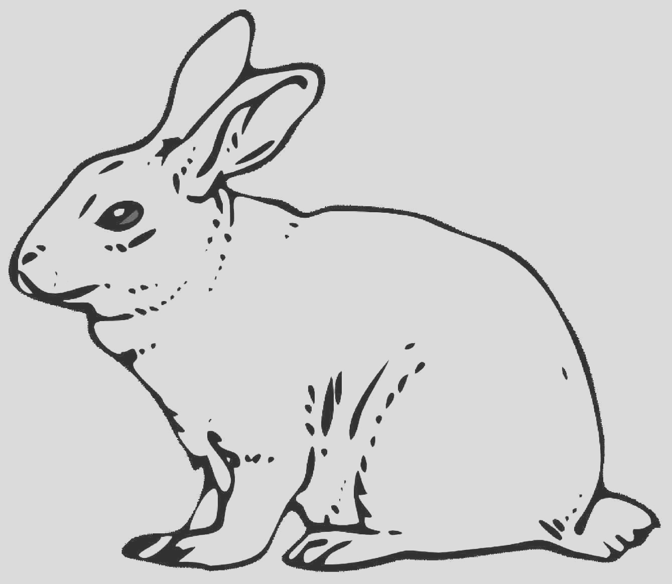 coloring pages of a rabbit