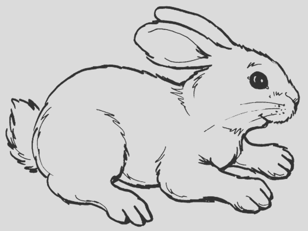 rabbits coloring pages realistic