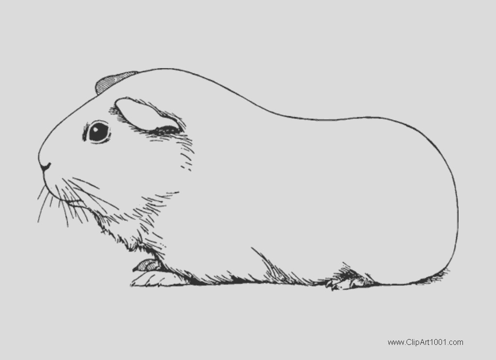 guinea pig coloring pages black and white