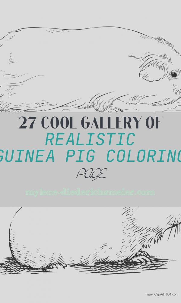 Realistic Guinea Pig Coloring Page New Realistic Guinea Pig Coloring Pages to Print Coloring