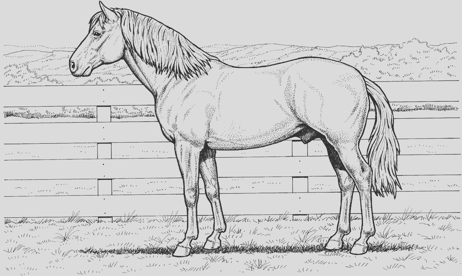 race horse coloring sheets sketch templates