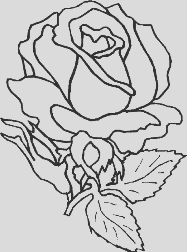 amazing rose flower coloring page