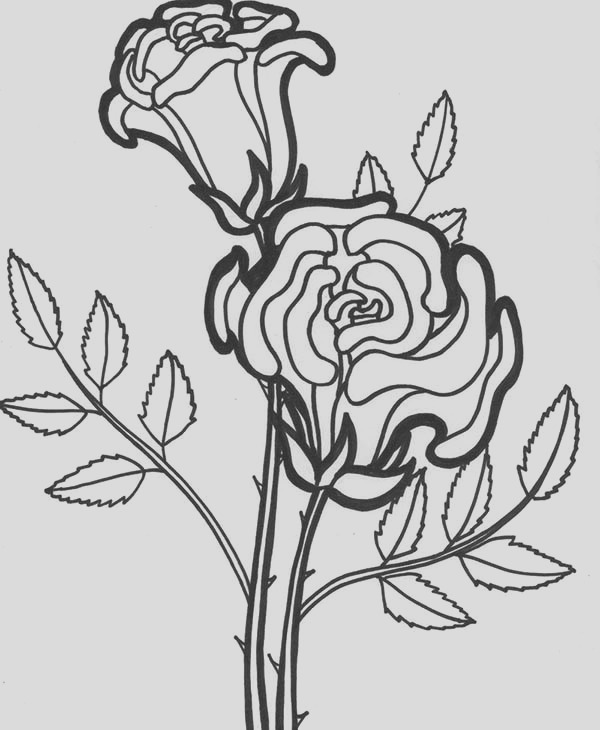 rose flower blooming coloring page