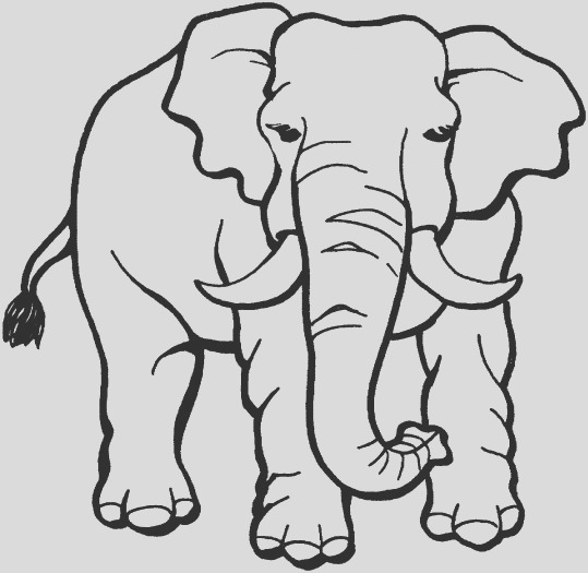 9 jungle animals coloring pages