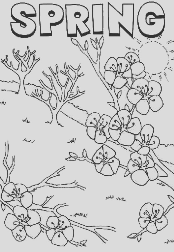 springtime is time for flower to bloom coloring page