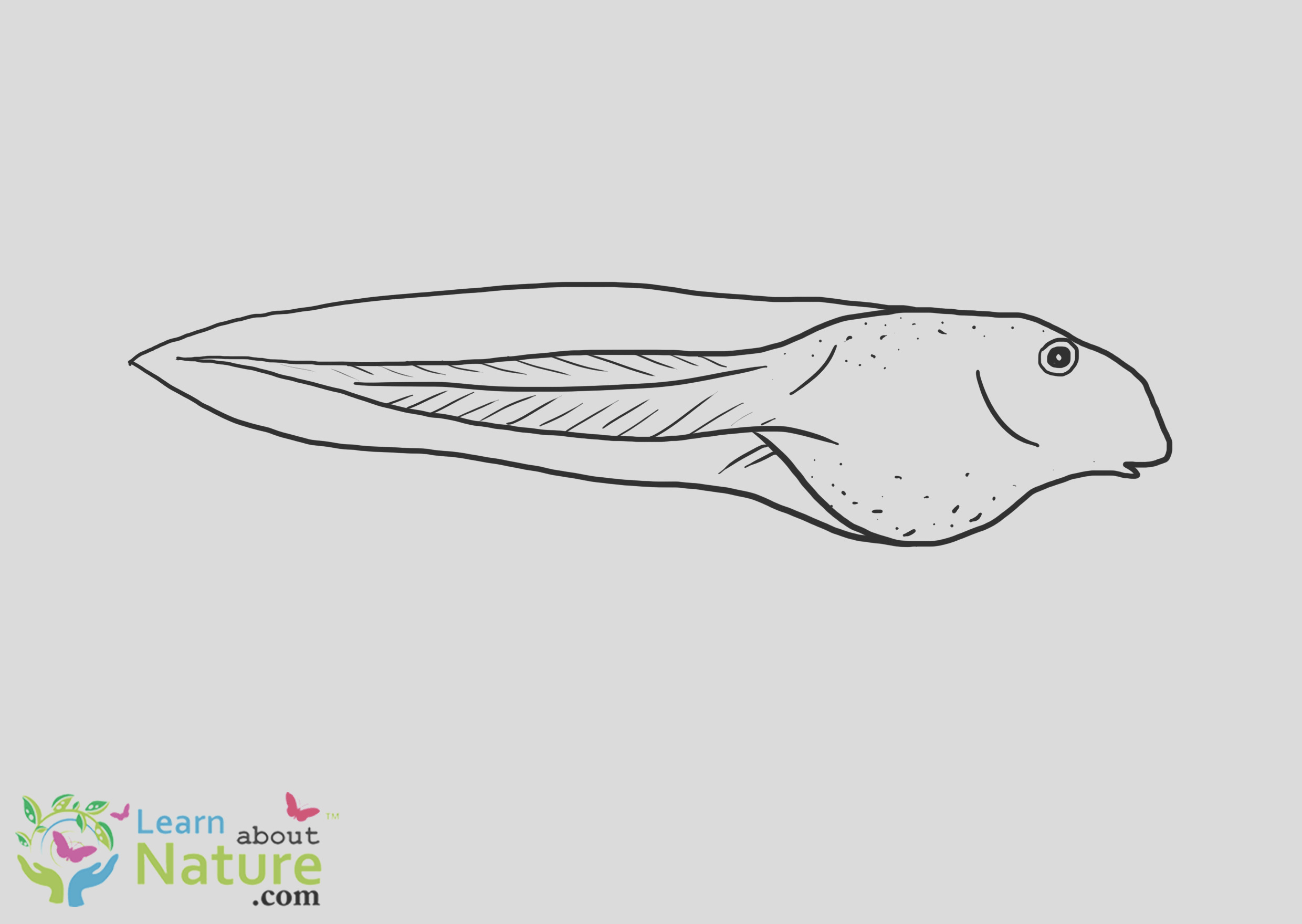 tadpole coloring page 3