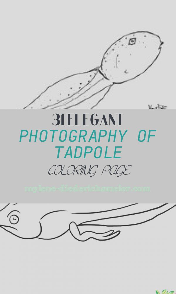 Tadpole Coloring Page Inspirational Bullfrog Main Page Care Tadpole Metamorphosis Videos