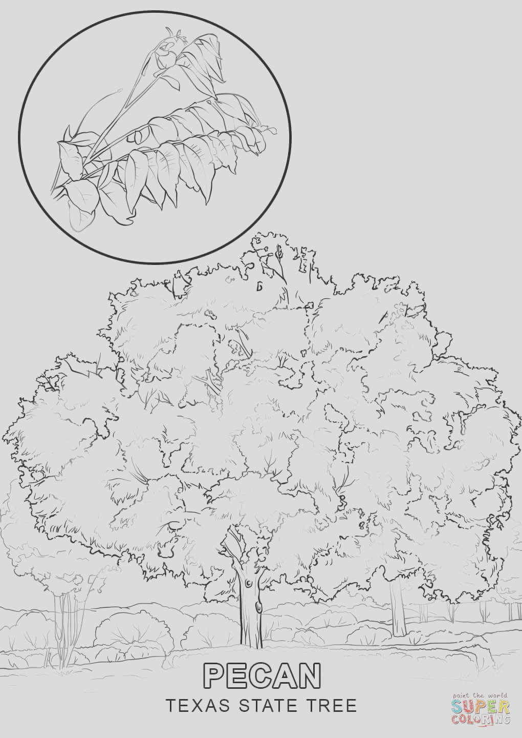 texas state symbols coloring pages