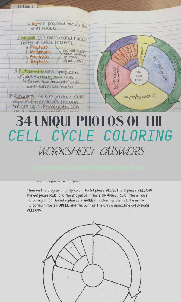 The Cell Cycle Coloring Worksheet Answers Awesome Cell Cycle Coloring