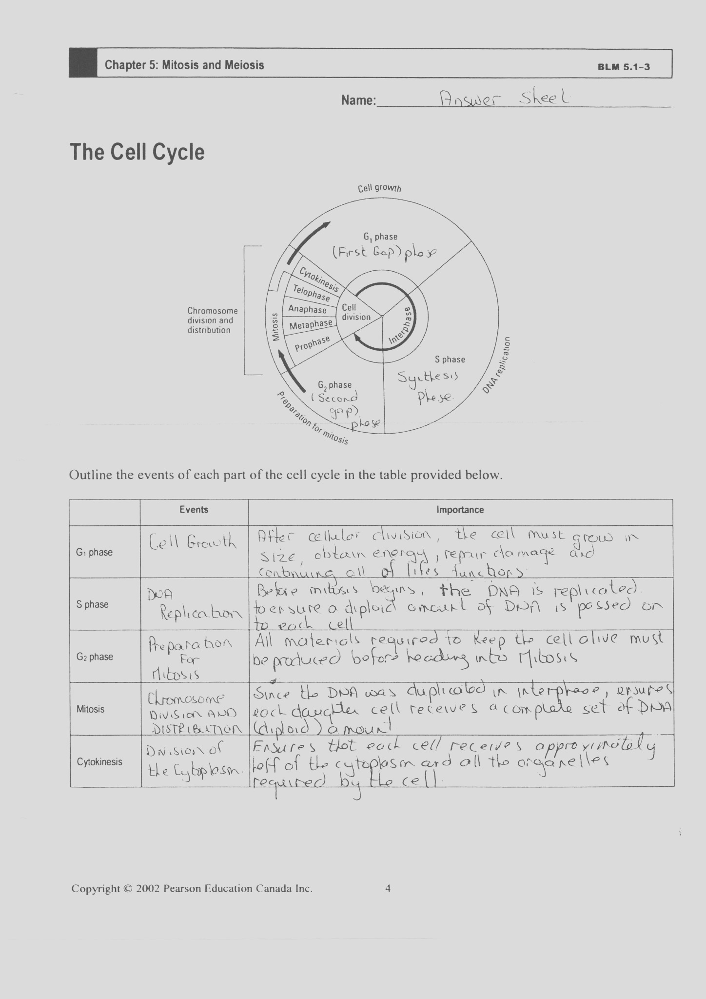 cell cycle and mitosis worksheet answer key