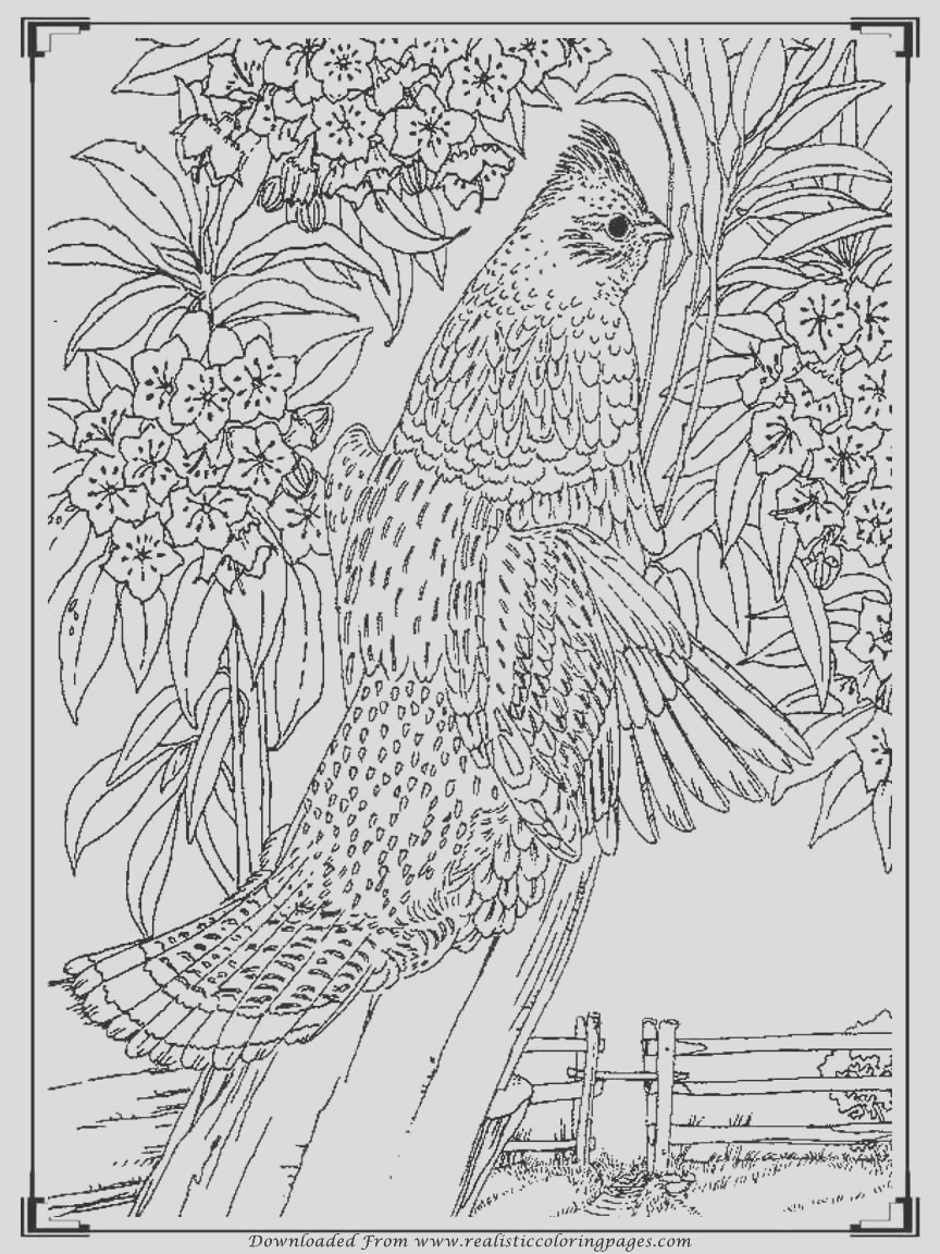 printable birds coloring pages for m=0
