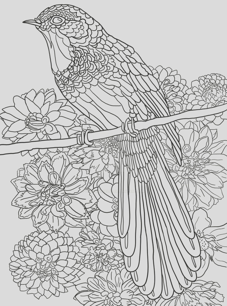 Page 16 of Australian Birds Adult Coloring Book