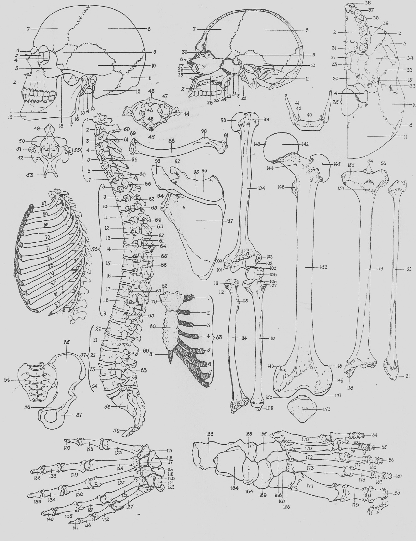 free anatomy and physiology coloring pages