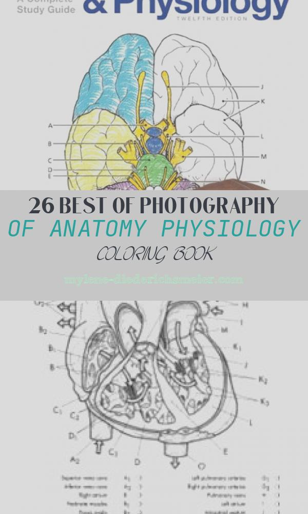 Anatomy Physiology Coloring Book Fresh Anatomy and Physiology Coloring Workbook A Plete Study