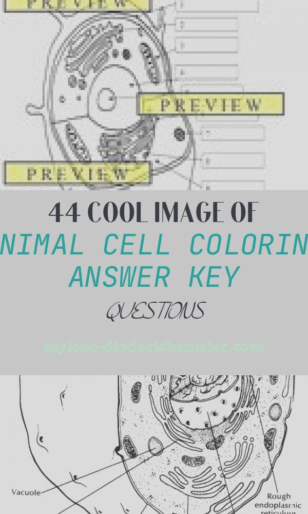 Animal Cell Coloring Answer Key Questions Awesome Animal Cells Coloring Worksheets & Teaching Resources