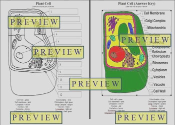 Cells 1 Plant Cell Coloring Worksheet with Questions Answer Key