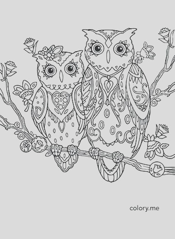 baby owl coloring pages to print