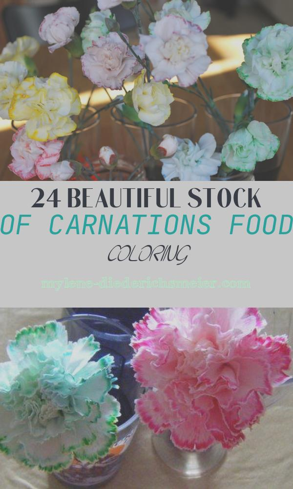 Carnations Food Coloring Fresh Gmos – What are they What Do We Need to Know