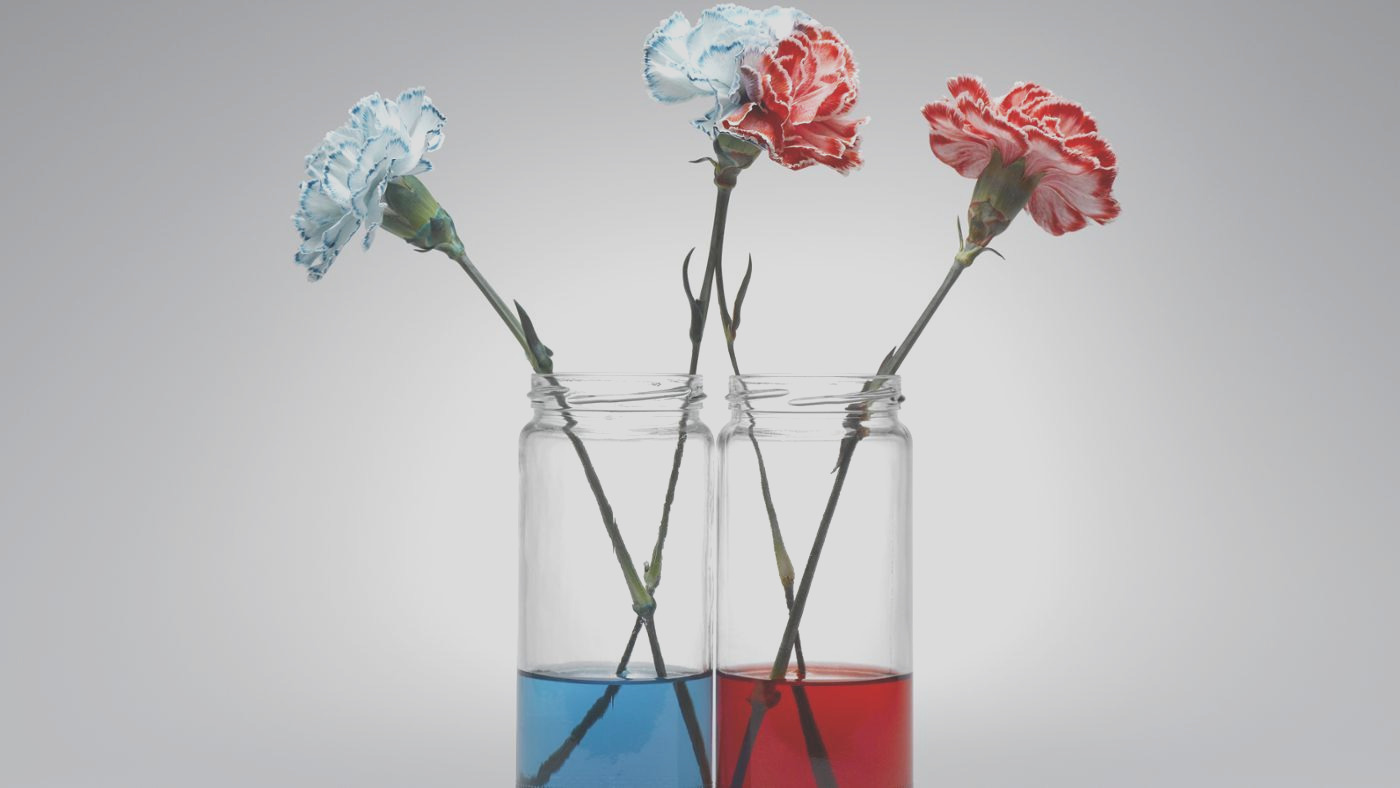 hydrogels for houseplants