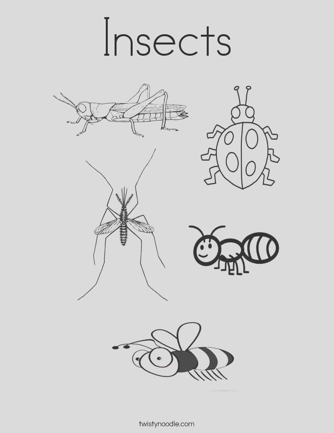 insects 8 coloring page