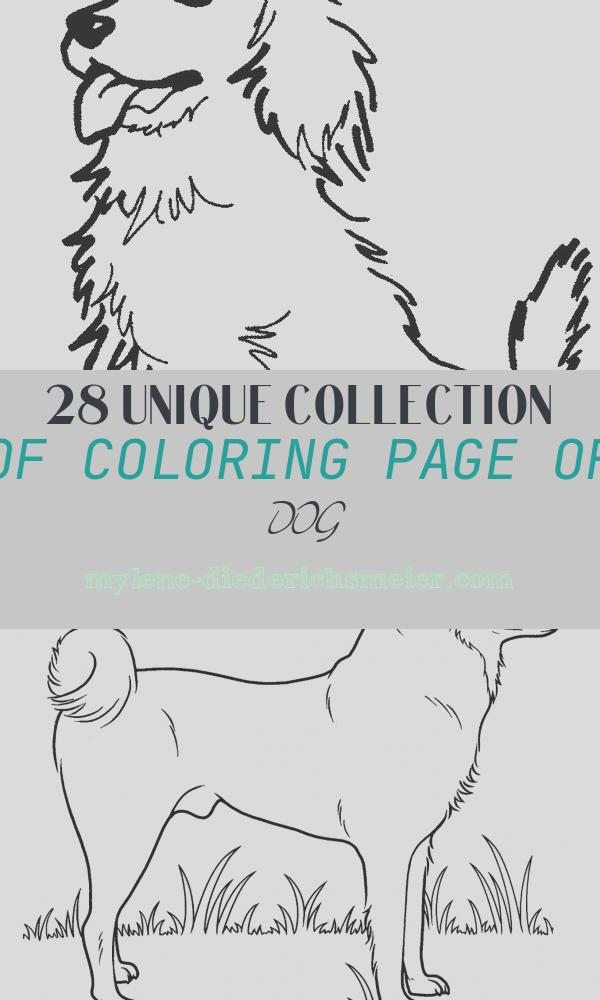 Coloring Page Of Dog Inspirational Dog Coloring Pages 2018 Dr Odd