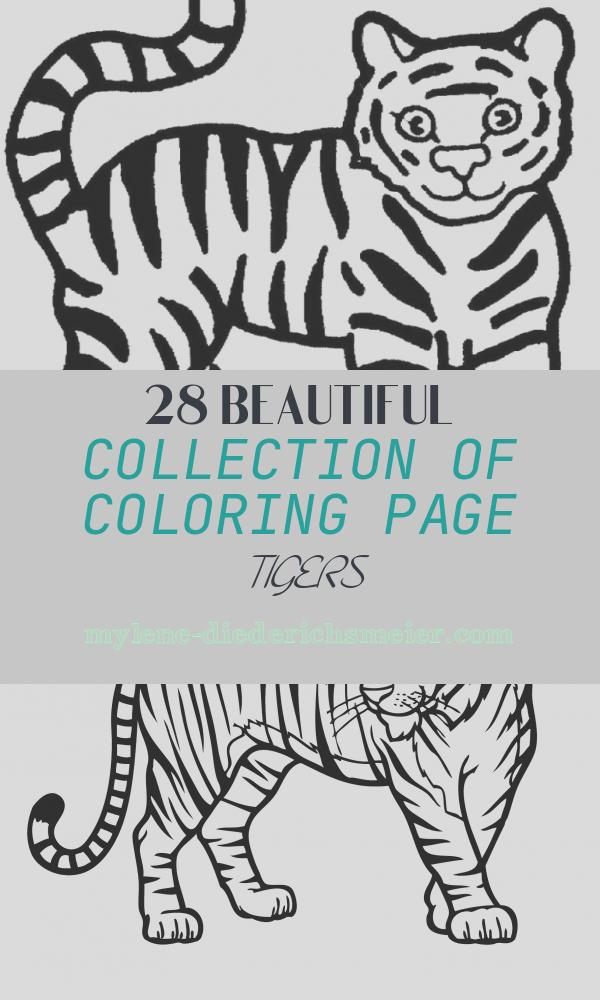 Coloring Page Tigers Fresh Free Printable Animal Tiger Coloring Pages