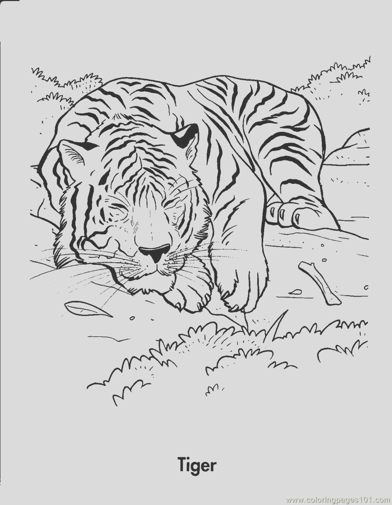 tiger is sleeping coloring page