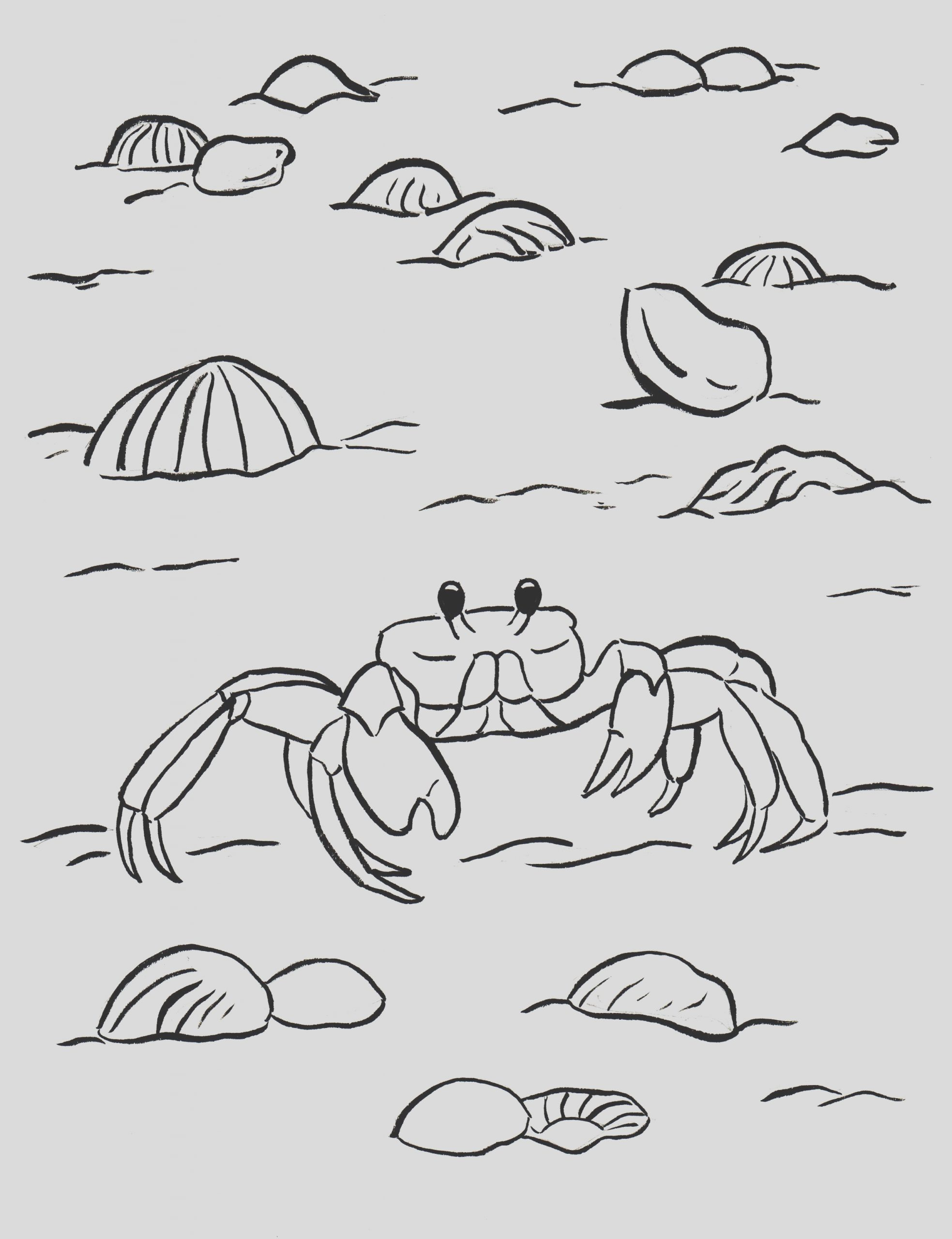 ghost crab coloring page