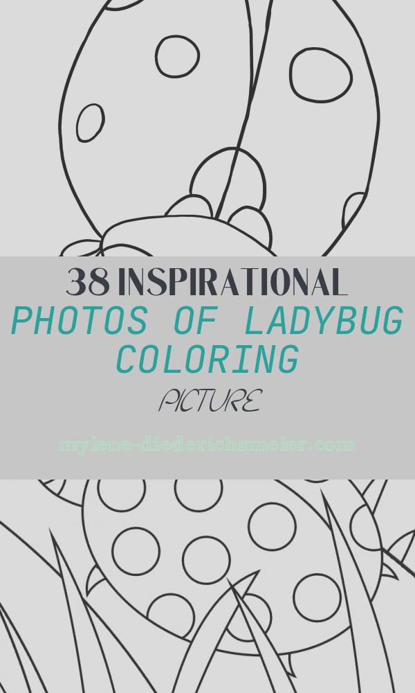 Ladybug Coloring Picture New Free Ladybug Coloring Pages to Print Out and Color