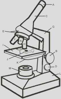 Microscope Coloring Answer Key