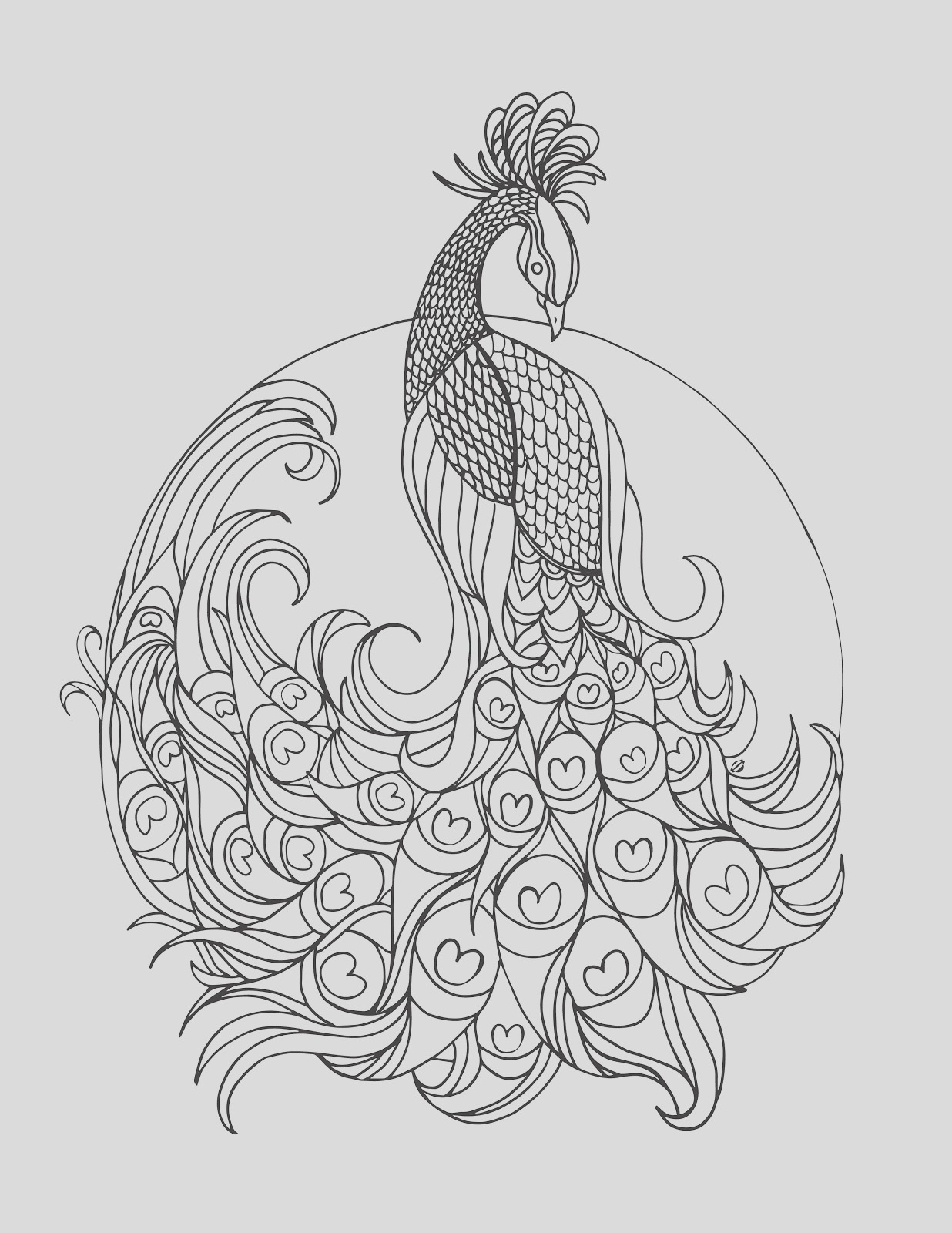 grown up colouring peacock