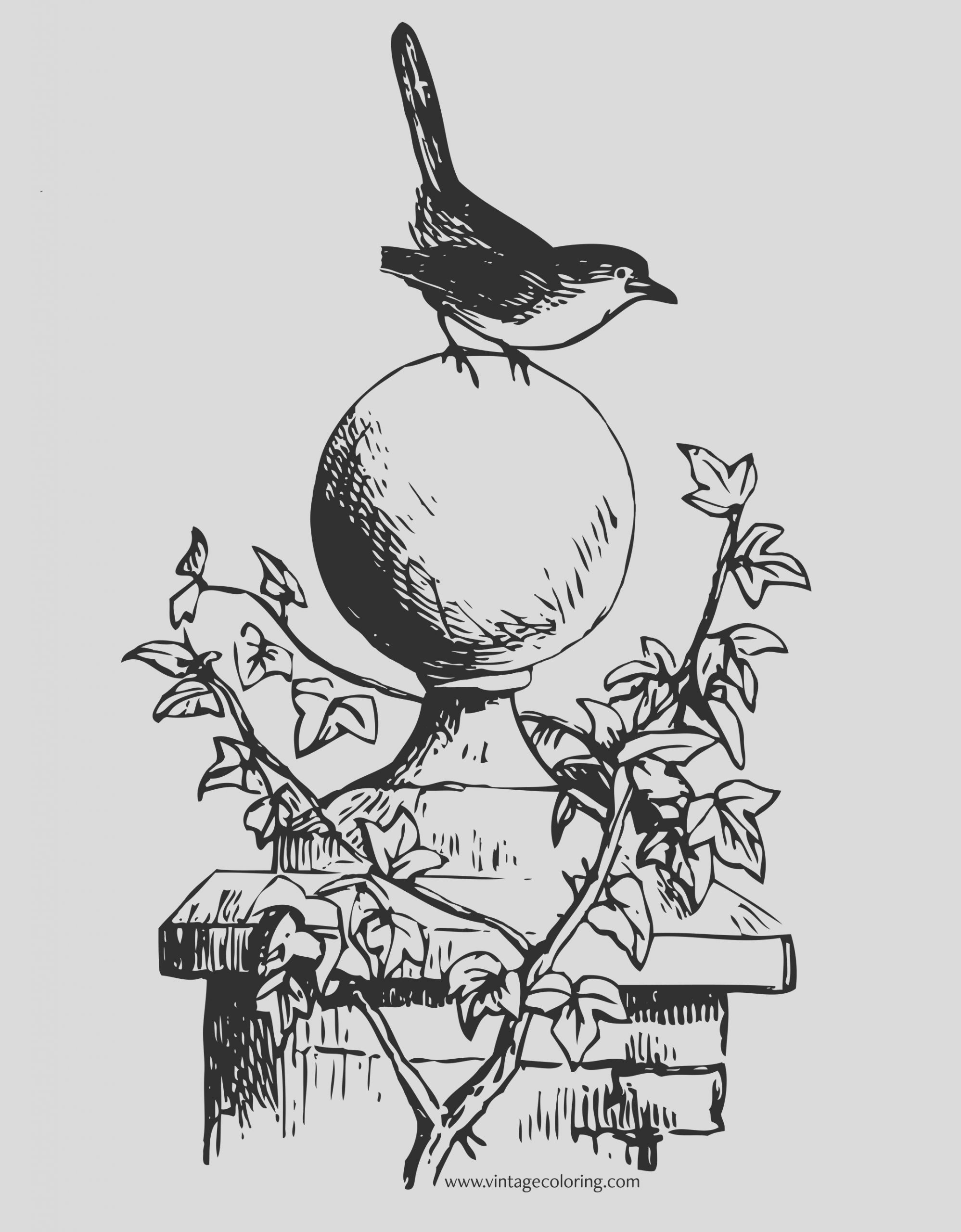 robin redbreast a free vintage coloring page