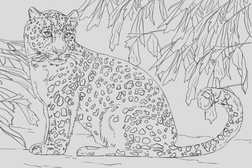 the snow leopards coloring