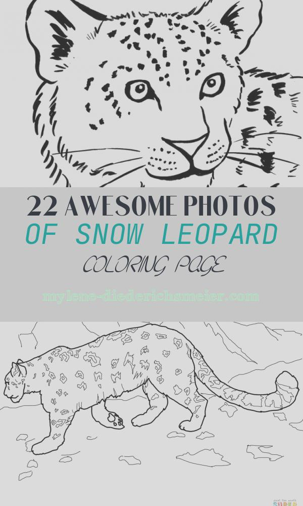 Snow Leopard Coloring Page Elegant Snow Leopard Coloring Page Samantha Bell Art Blocks