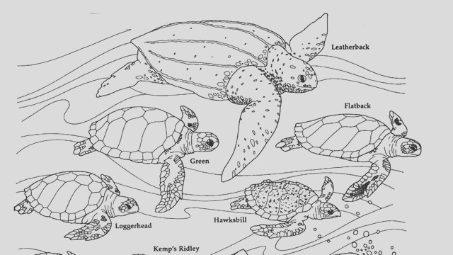 32 the biology coloring book