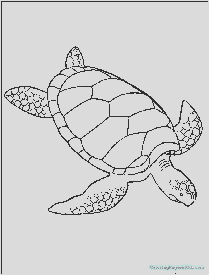 sea turtle coloring pages 1018