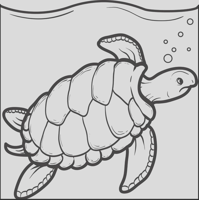 sea turtle drawing for kids