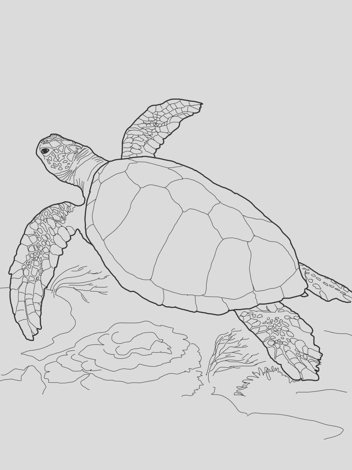 realistic turtle sketch templates