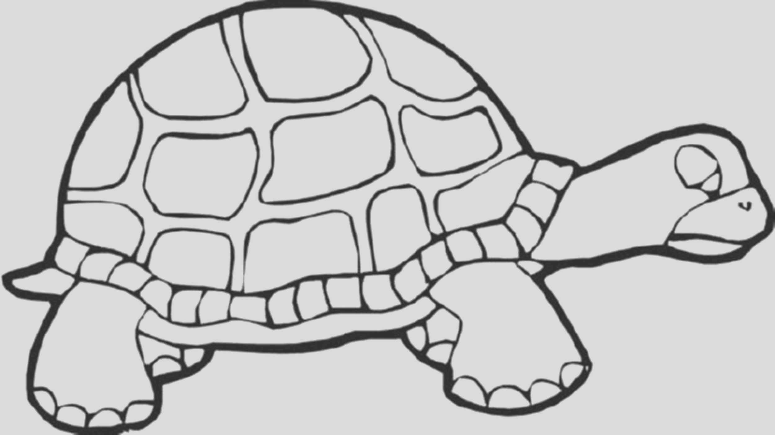 turtle coloring pages educational tool