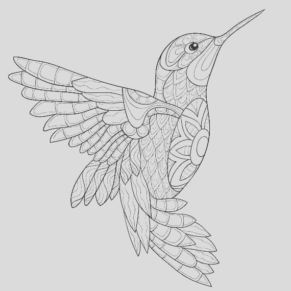 coloring pages for adults hummingbird