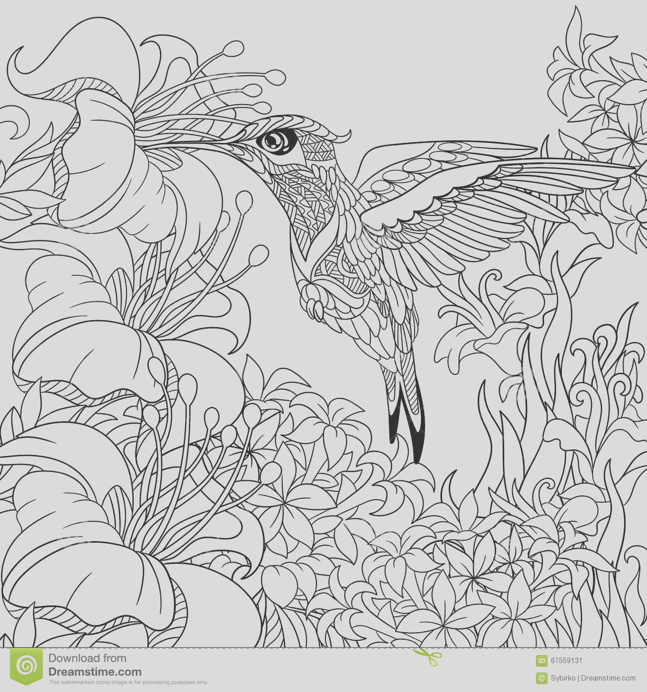 stock illustration zentangle stylized hummingbird cartoon flying around flowers full nectar sketch adult antistress coloring page hand drawn image