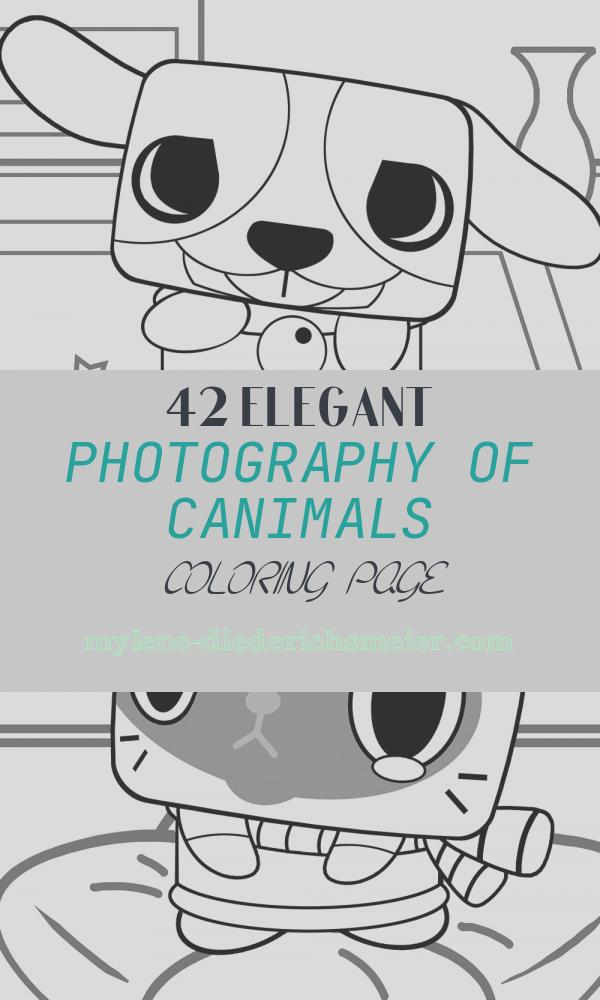 Canimals Coloring Page Luxury Canimals Printable Coloring Pages Coloring Pages