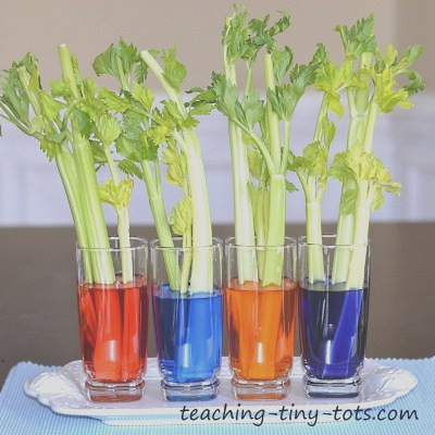 toddler science celery experiment