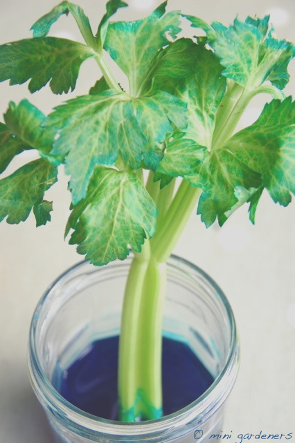 would you eat blue celery