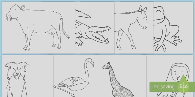 t t 5029 animal colouring sheets