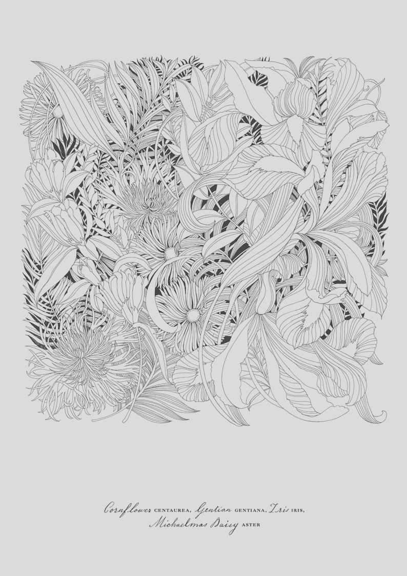 floribunda a flower coloring book by