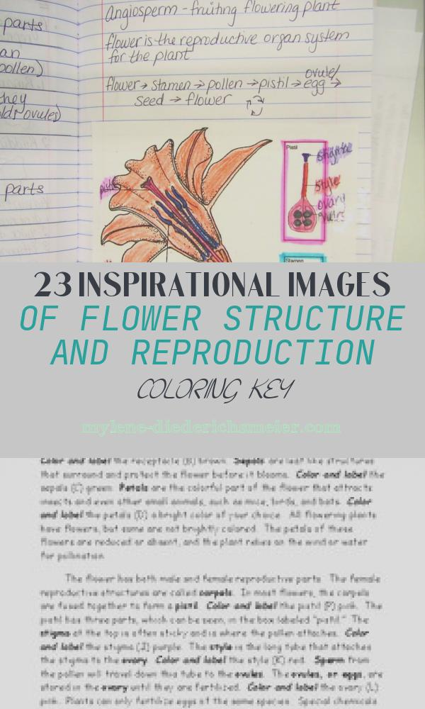 Flower Structure and Reproduction Coloring Key Inspirational 94 95 Flower Structure and Reproduction Pg 94 Pg 95