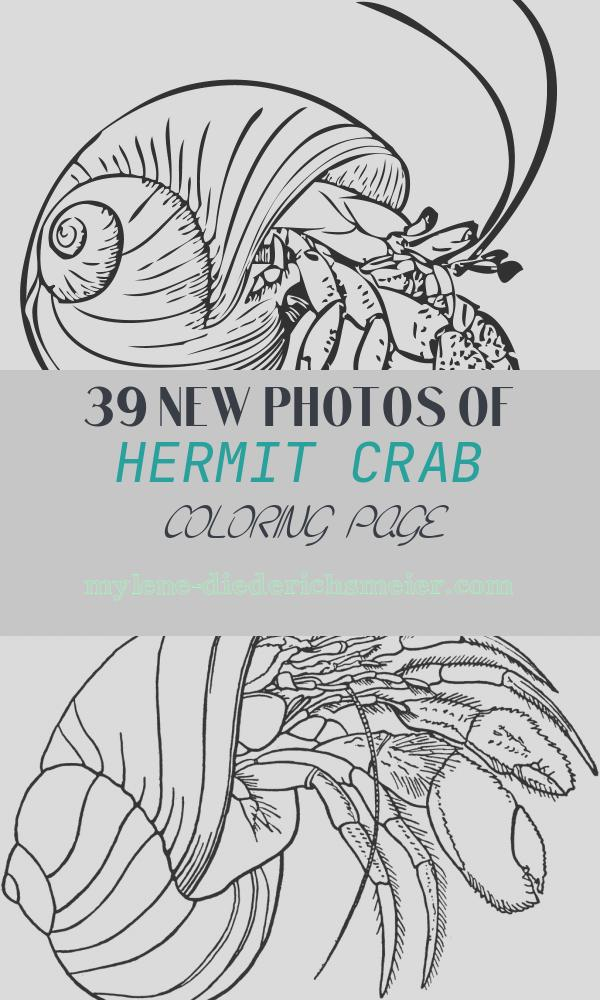 Hermit Crab Coloring Page Awesome Free Printable Hermit Crab Coloring Pages for Kids